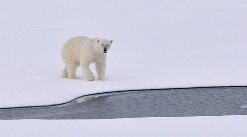 Arktyka zmiany klimatu