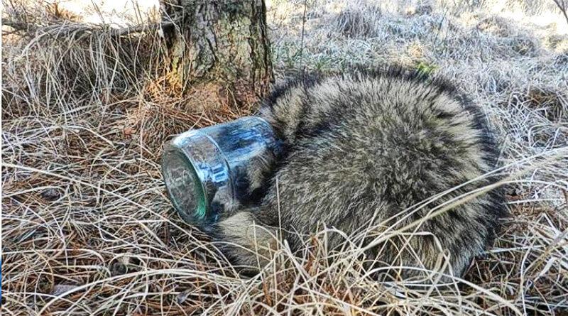 Śmieci szkodzą zwierzętom
