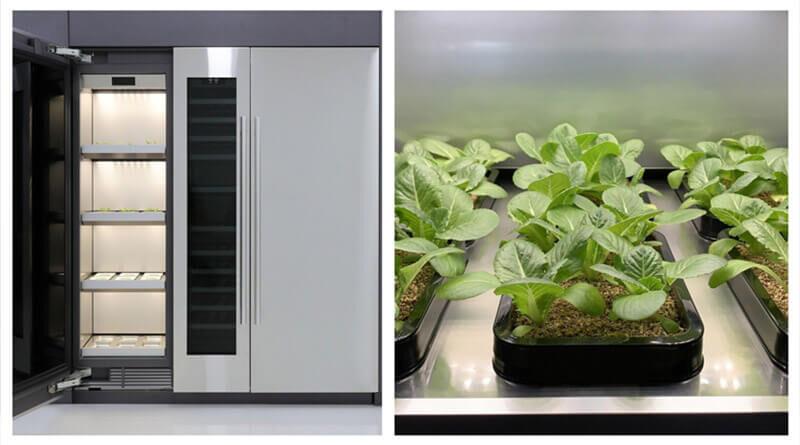 LG domowa uprawa roślin