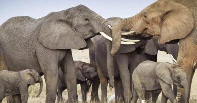 Zwierzęta - babcie i dziadkowie