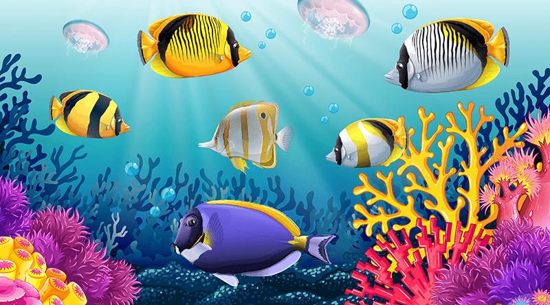 Jak założyć akwarium