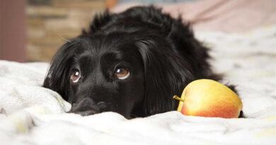 Jak nauczyć psa komend
