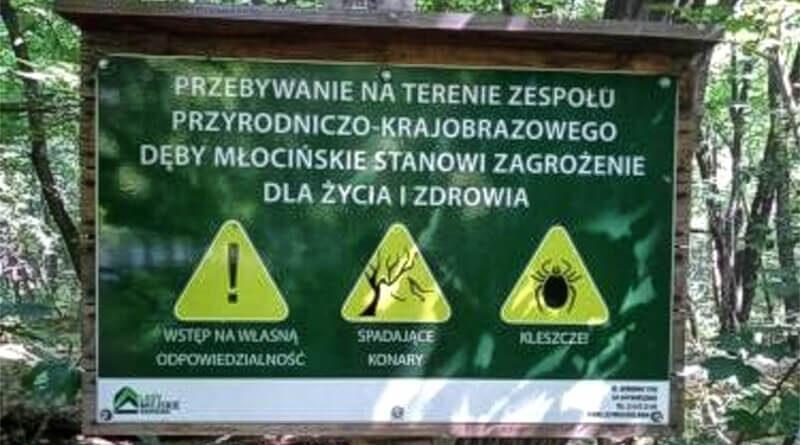 borelioza_diagnostyka