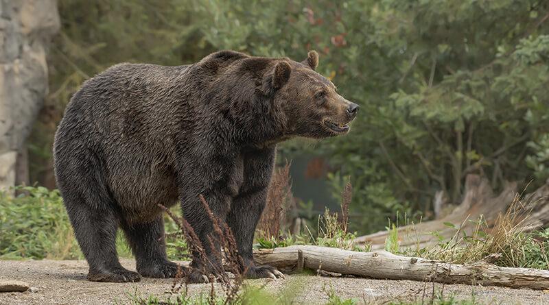 Niedźwiedź spotkanie